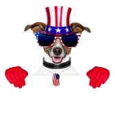 19405273-american-dog-with-red-gloves-behind-banner